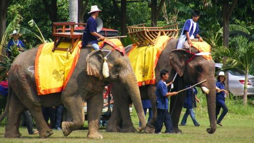 Парад слонов в северной провинции Таиланда
