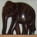 слон14