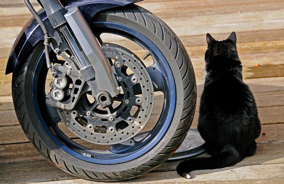 Кот из колеса