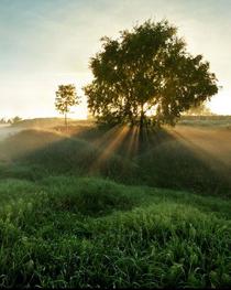 Каждое дерево имеет душу.