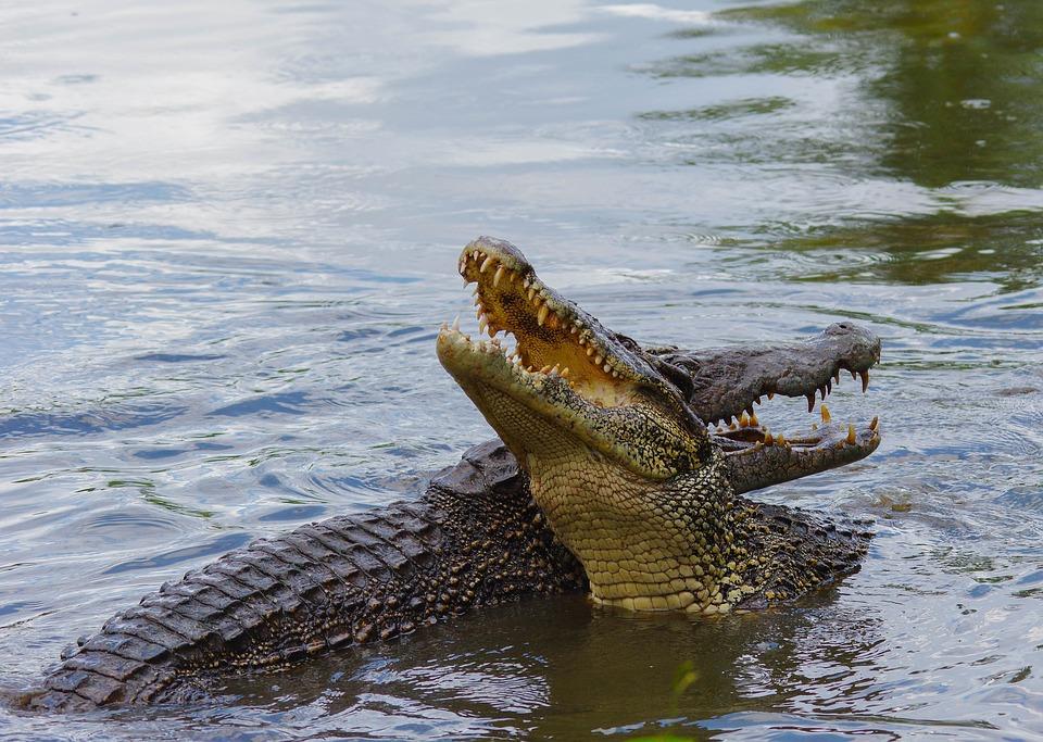 7 сказочных мест на Кубе. Крокодилы пара