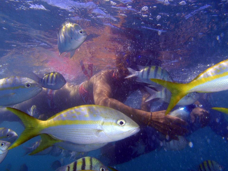 7 сказочных мест на Кубе. Подводное плавание . Рыбы