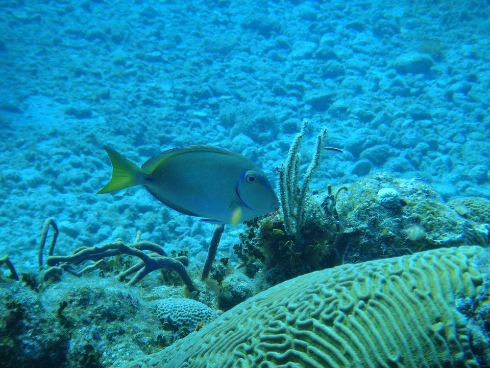 7 сказочных мест на Кубе. Рыбы