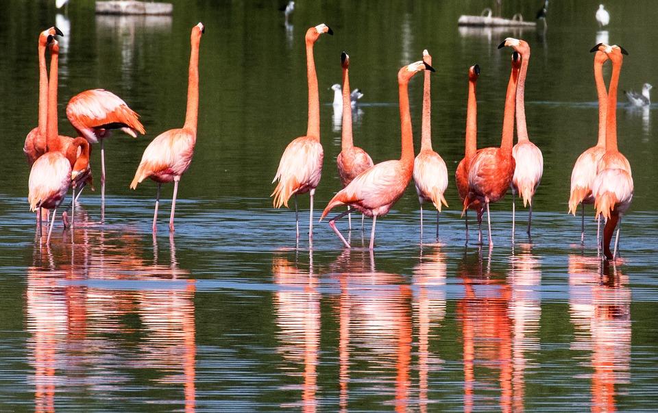 7 сказочных мест на Кубе. Фламинго