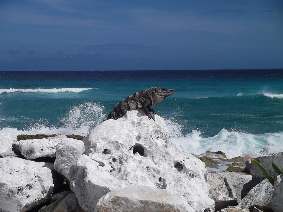 7 лучших мест Мексики. Игуана