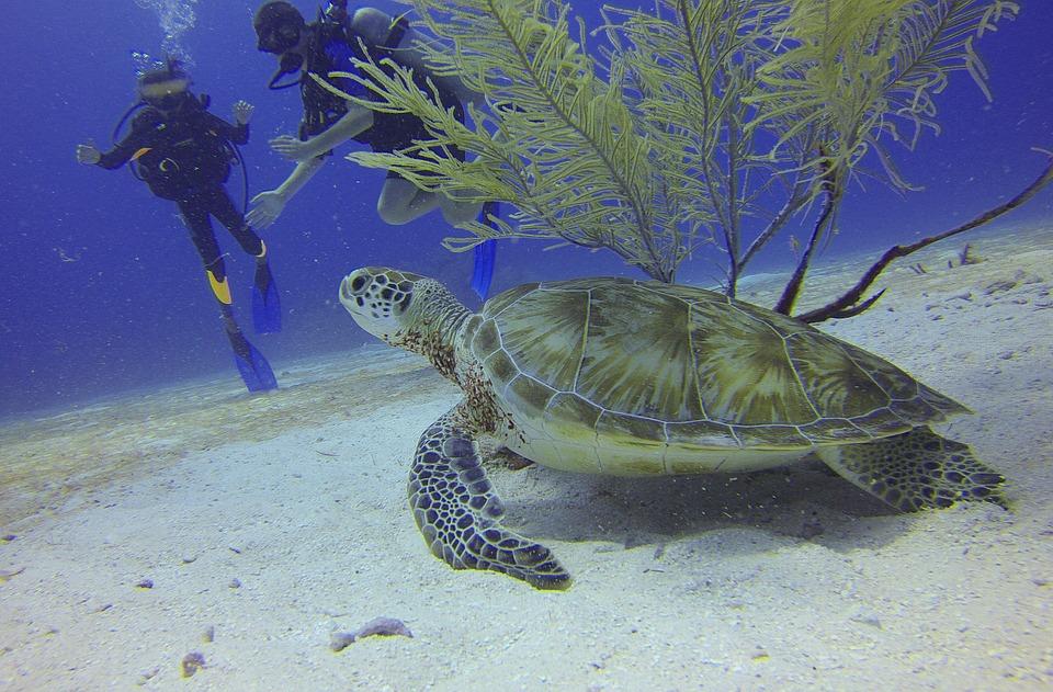 7 лучших мест Мексики. Черепаха.