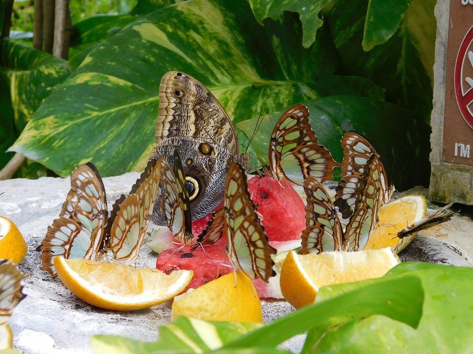 7 ярких примеров самобытной культуры Мексики.Бабочки.Фрукты.