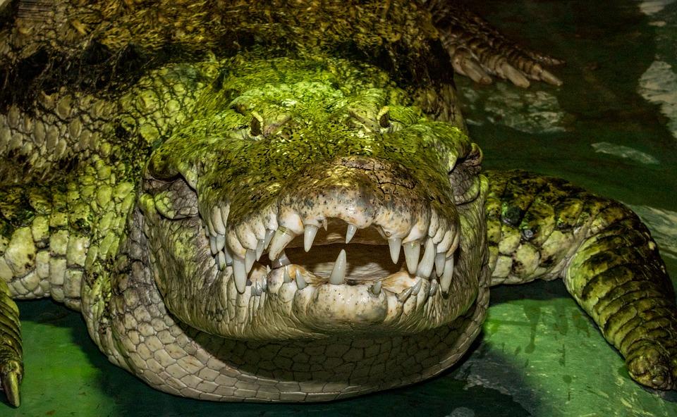 Индонезия. Крокодил1