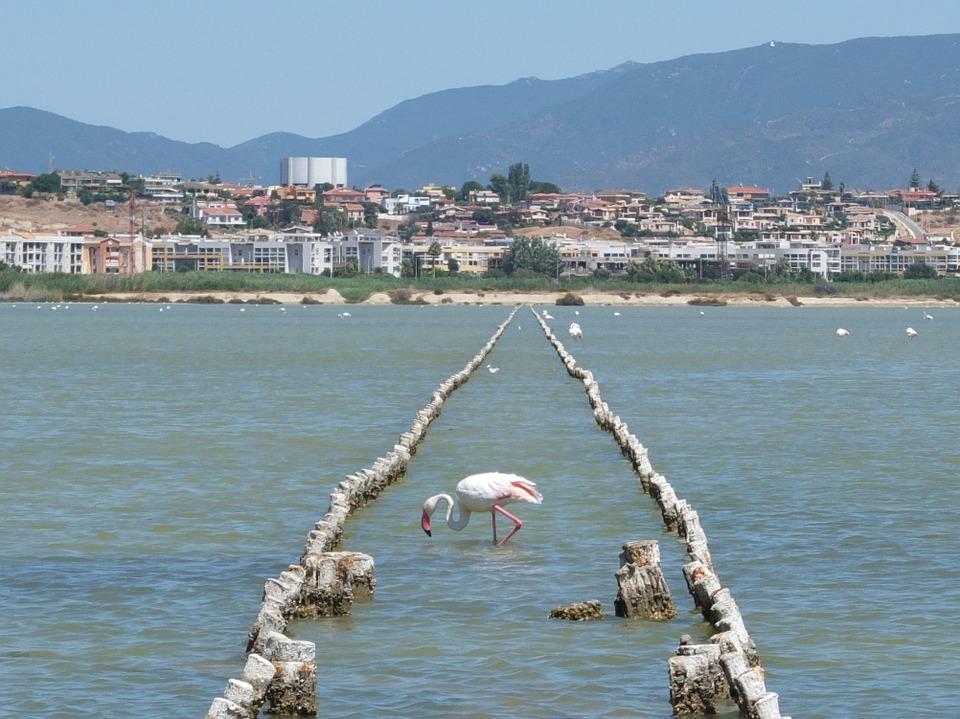 Сардиния. Фламинго
