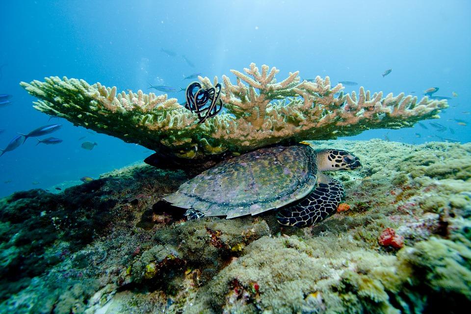 7 чудес сказочного царства.Мальдивы. Рыбки