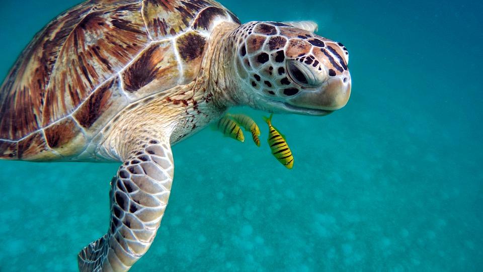 7 чудес сказочного царства.Мальдивы. Черепаха