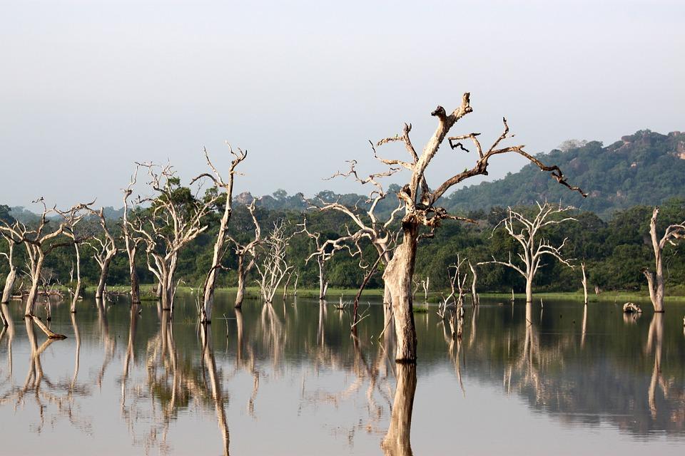 Шри-Ланка1