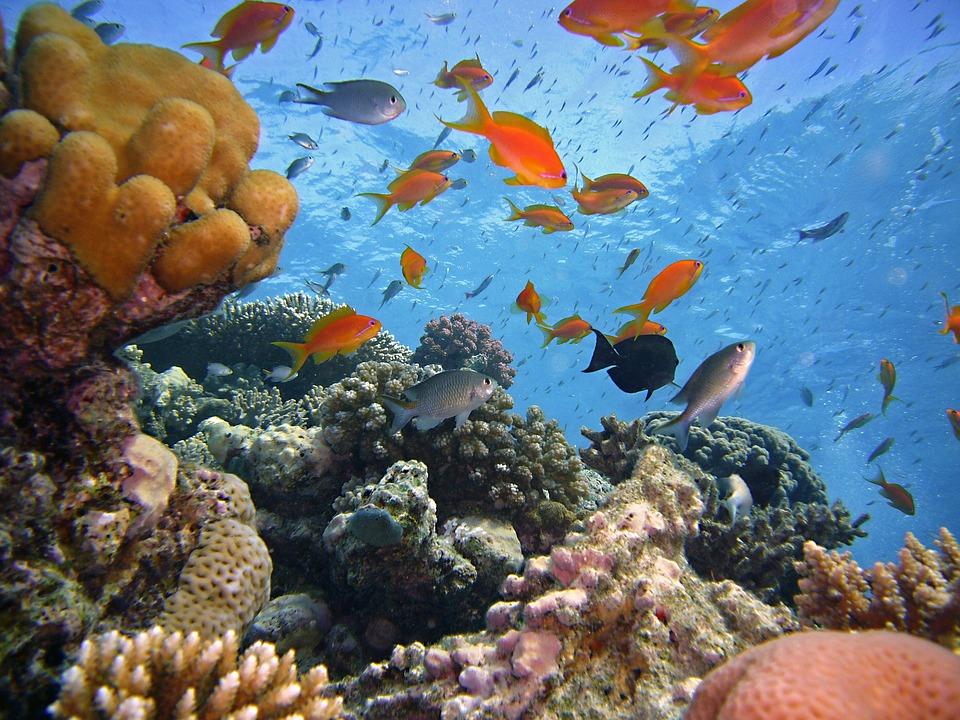 Египет.Подводный мир