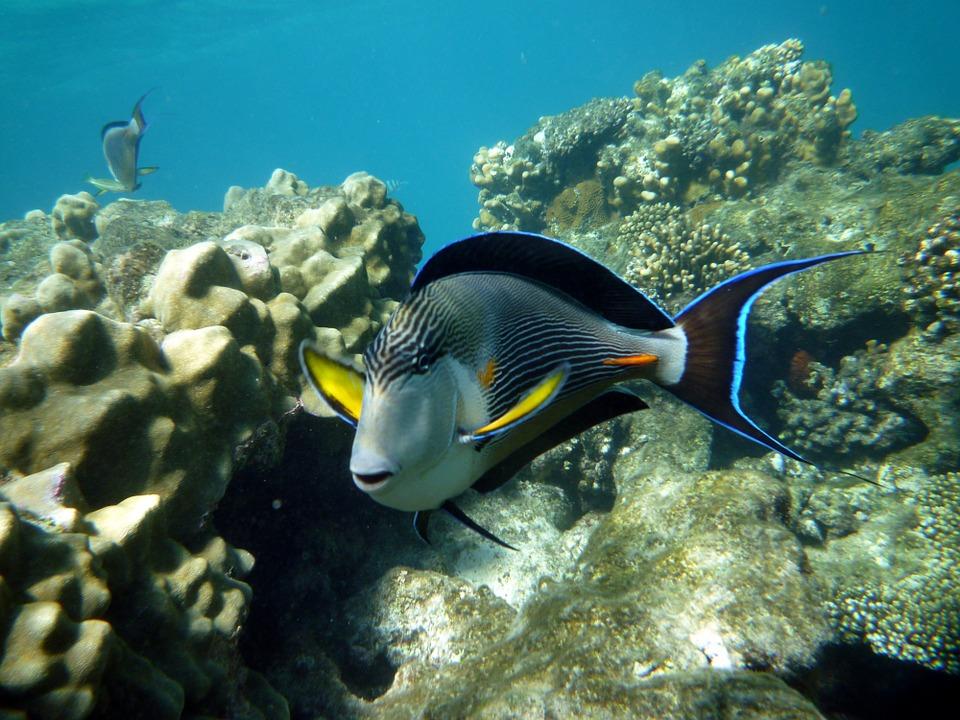 Египет.Рыба