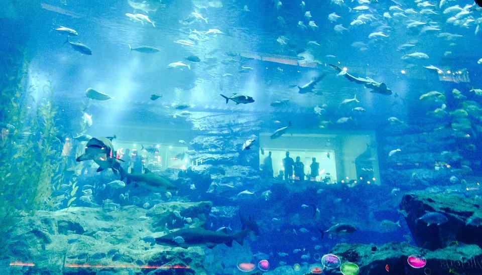 Дубай. Океанариум