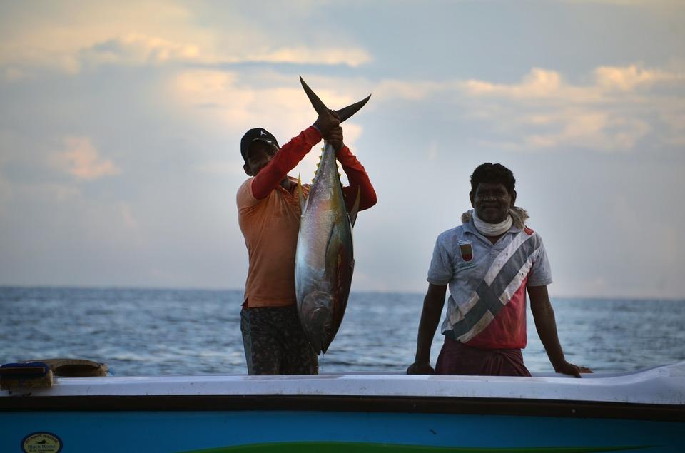 Шри-Ланка. Рыбалкаjpg