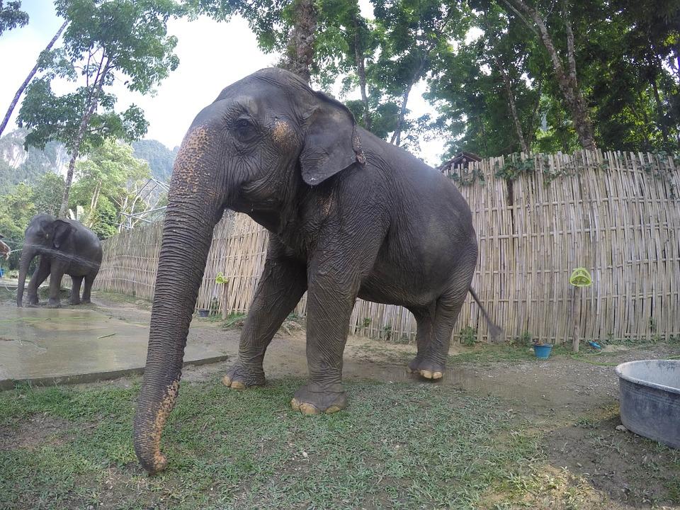 Таиланд. Слоны