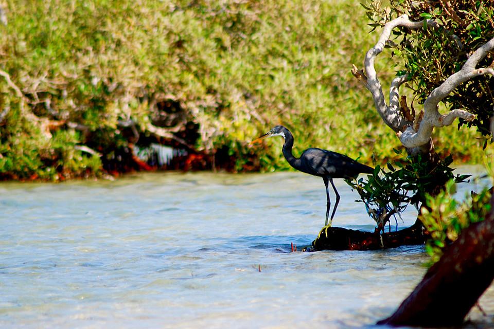 Египет. Национальный парк Вади-Эль-Гемаль