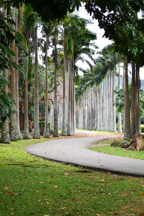 Шри-Ланка. Перадении. Мемориальные деревья