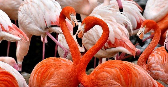 ОАЭ. Фламинго